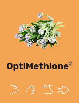 OptiMethione<sup>®</sup>
